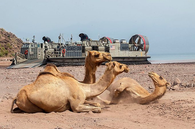 Dromedaries in front of an American landing craft